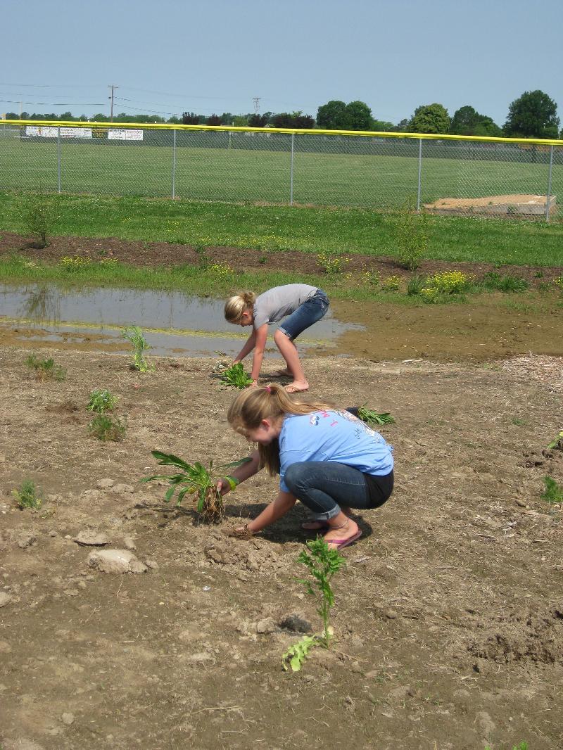 corsica girls planting