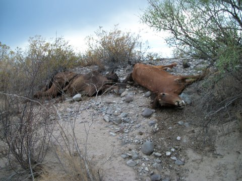 Horses dumped in creek bed