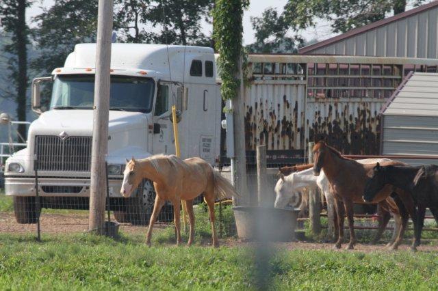R & R Livestock
