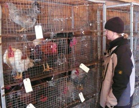 Sonja at bird auction