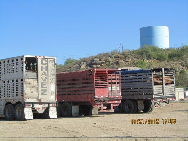 Mexican transport trucks