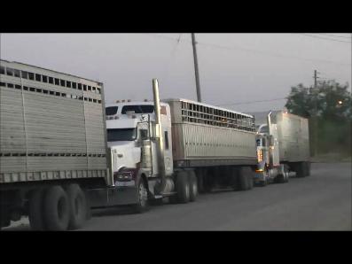 slaughter trucks waiting in line