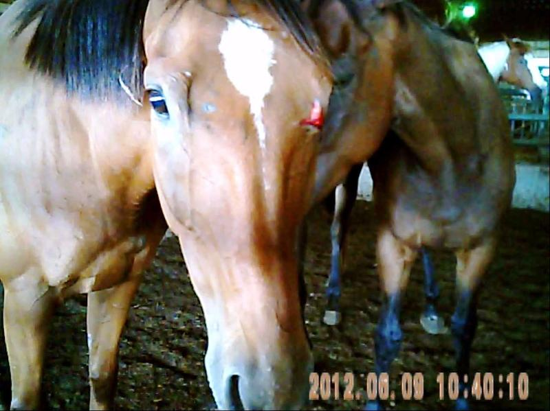 Mare with fresh face injury