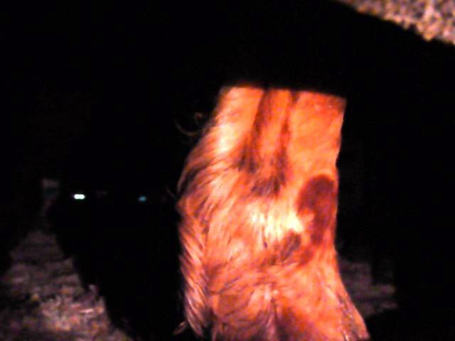 horse inside dark trailer