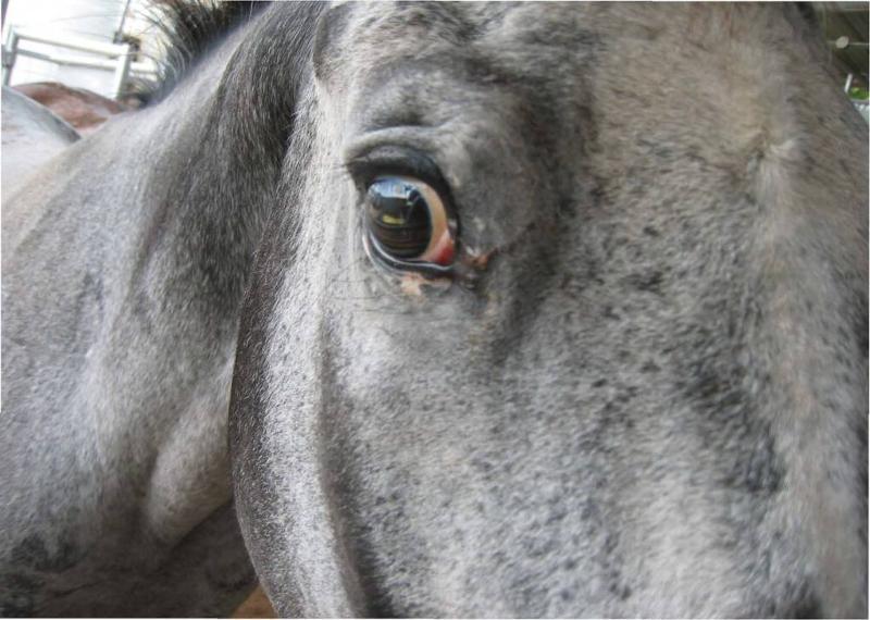 horse face detail