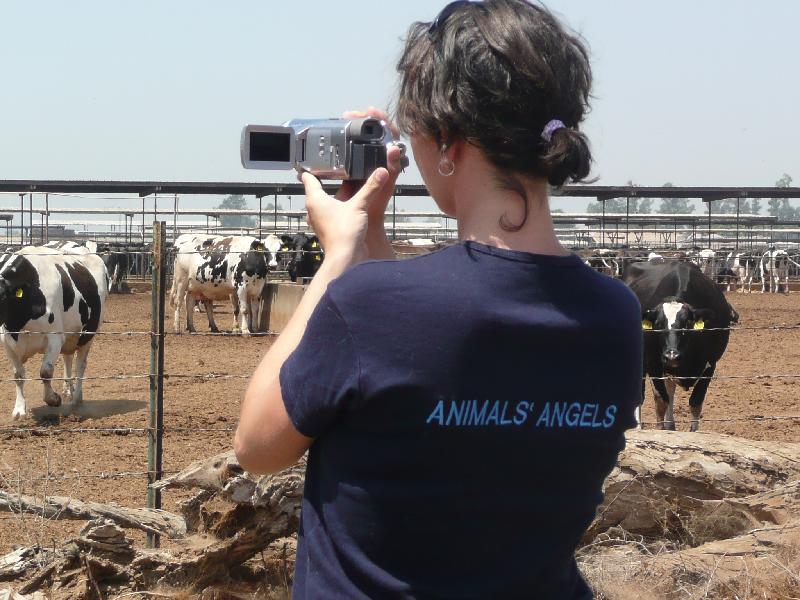 Chino Valley Dairy Farm