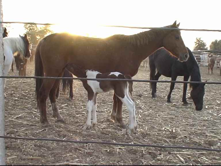 mare and foal in kill pen