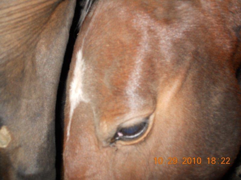 Horses inside trailer