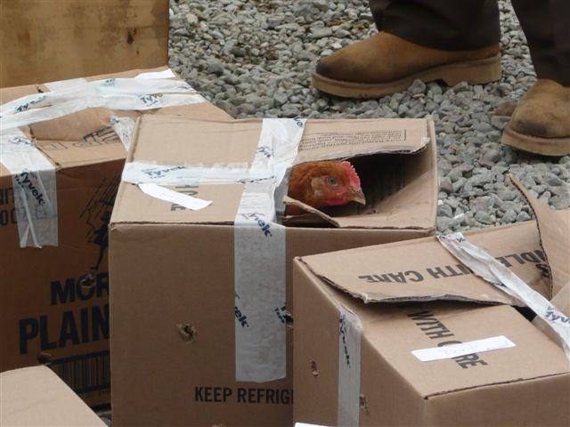 bird in cardboard box