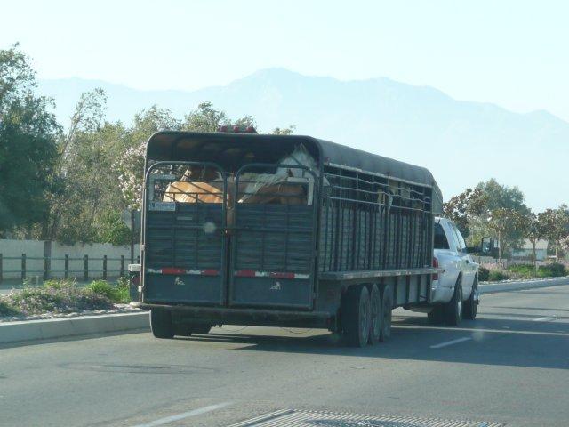 Horses on Misner's trailer