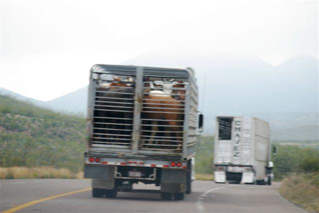 horse trucks in Mexico