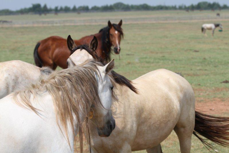 BLM Horses 3
