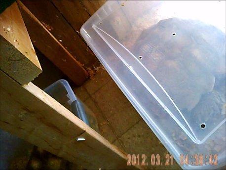 tortoise in plastic tub