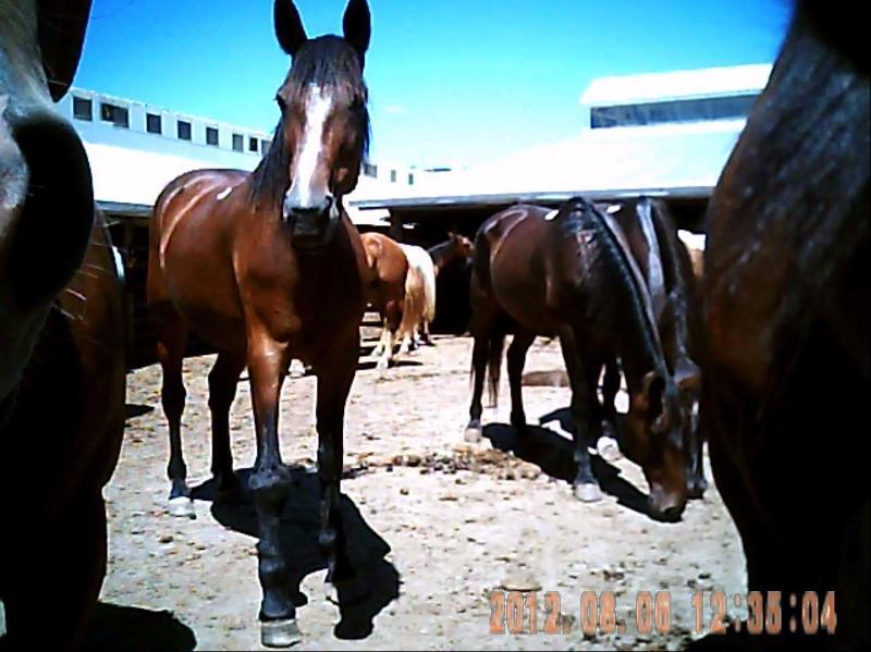 Horse in outside pens