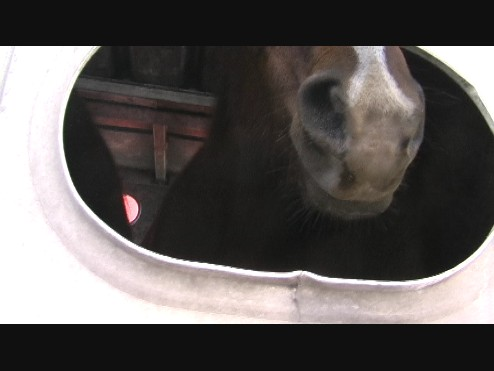 horse in double deck trailer