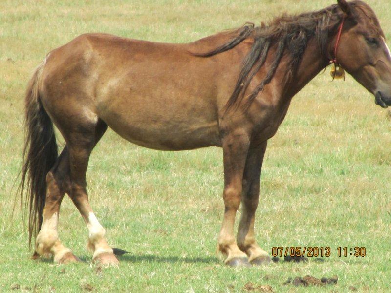 BLM horses 4