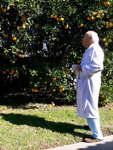 Dad with orange tree