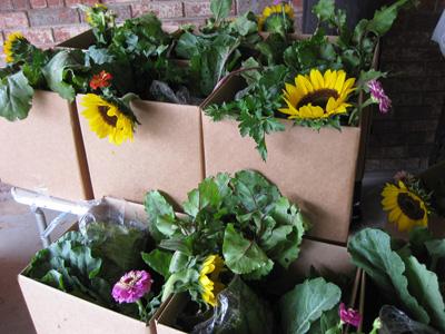 Gotreaux Familly Farms CSA box