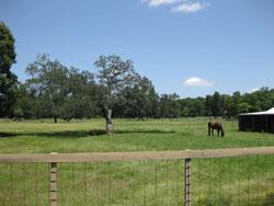 Louisiana pasture