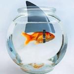 Goldfish shark