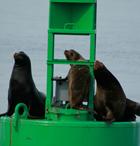 Save the Bay Seals