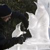 Penguin Ice Sculptures