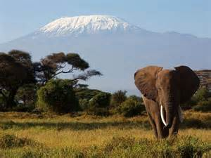 Photo of Mt. Kilimanjaro in the background with an elephant in the foreground.