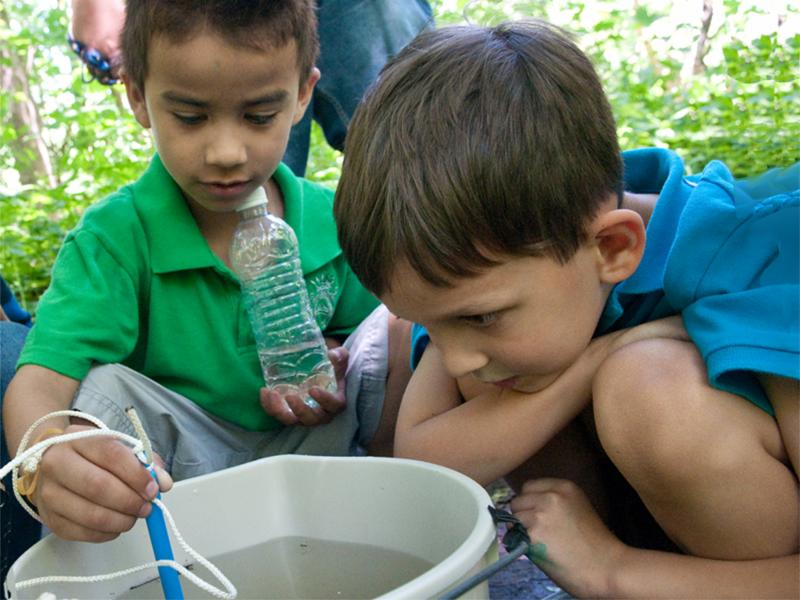 Two boys looks at water samples in a bucket.