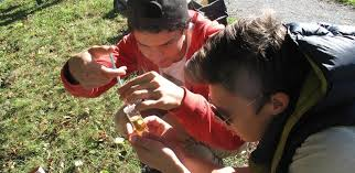 Two students look together at an experiment in the field.