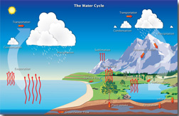 An infographic showing the water cycle.