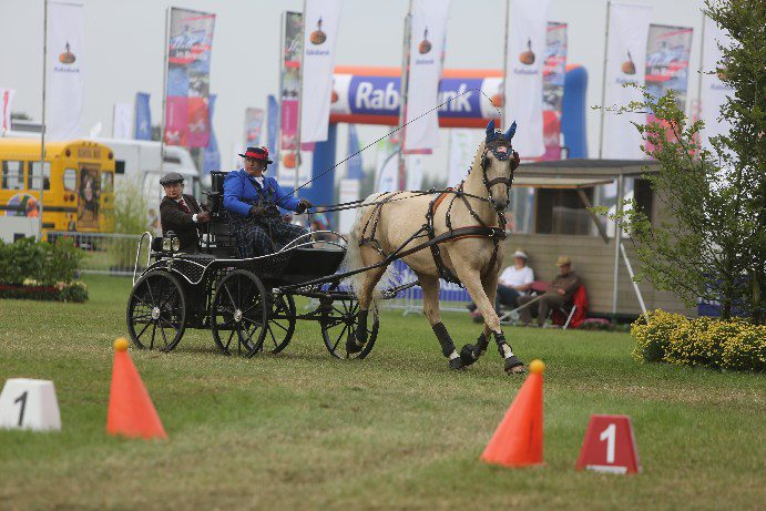 2012 FEI Para-Equestrian Driving World Championships in Breda, the Netherlands.   Driver is Diane Kastama, Horse is Ruby KWPN , Groom is Jody Cutler  Picture taken by Marie de Ronde.