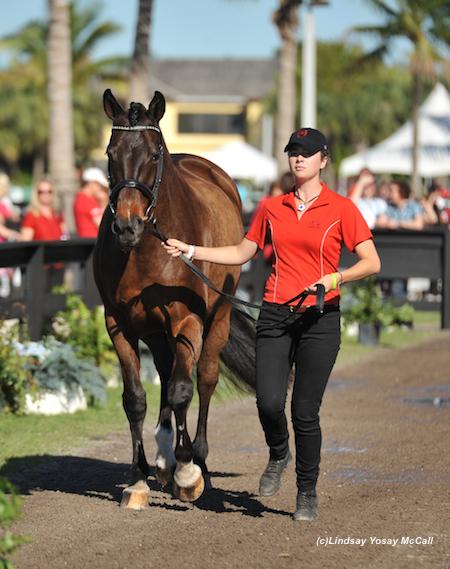Lauren Barwick's horse Ferdonia 2 Photo by Lindsay McCall