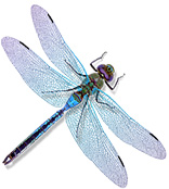 Dragonfly_Mascot