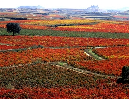 Oct 2014 News - La Rioja Wine Discovery