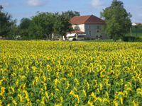 July Newsletter Dordogne