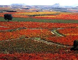 April 2016 News - La Rioja Wine Discovery