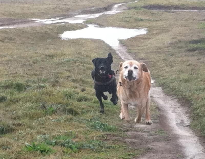 Gina and Sanchez running through puddles