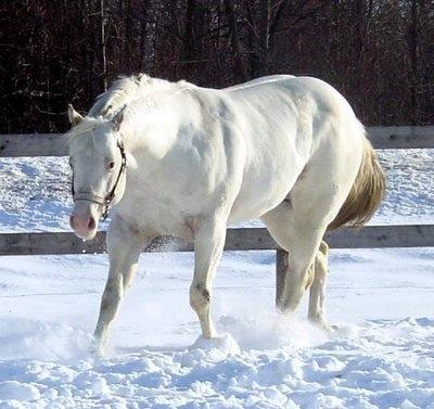 Harmony Farms Stallion
