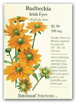 Rudbeckis Irish Eyes
