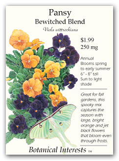 Pansy Betwitched
