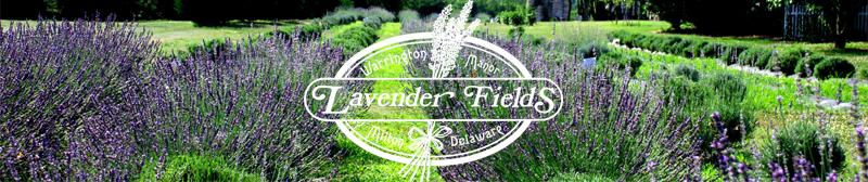 Lavender Fields, Milton, DE