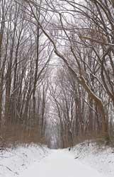 winter watkins regional park