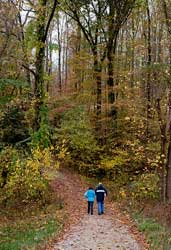 fall walk in the woods