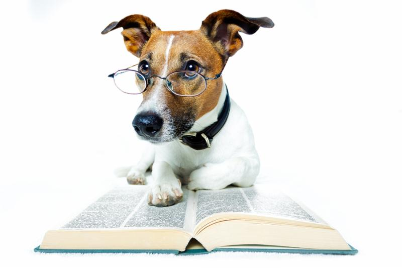 dog with a lot of books and reading
