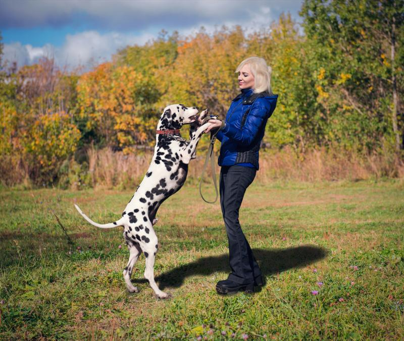 Beautiful blonde girl in a blue jacket and black jeans dances with her dog breed Dalmatian in nature among green grass and trees, they are happy and smiling