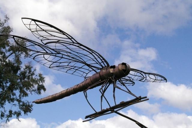 lmno dragonfly