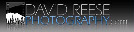 David Reese Logo