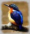 MulticoloredBird