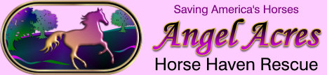 Angel Acres Horse Haven Rescue, Inc.