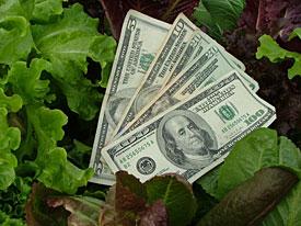money in lettuce